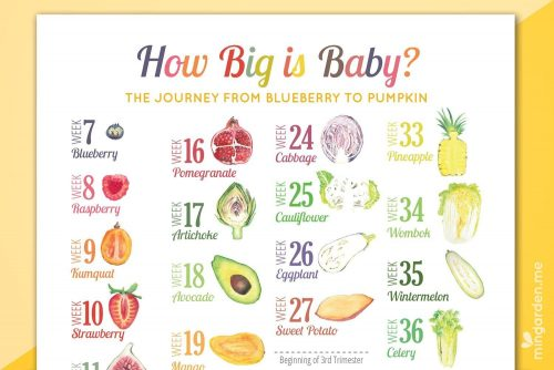 Pregnancy Milestone Countdown Week by Week Fruits Vegetable Comparison