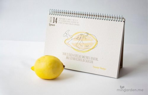 Baby Size of Lemon Week 14 Pregnancy Milestone Journal