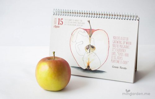 Baby Size of Apple Week 15 Pregnancy Journal