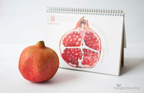 Baby Size of Pomegranate Week 16 Pregnancy Milestone Journal