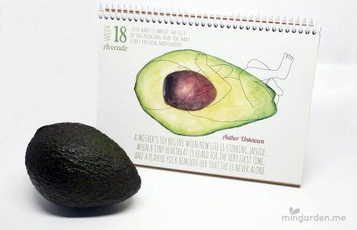 Baby Size of Avocado Week 18 Pregnancy Milestone Journal